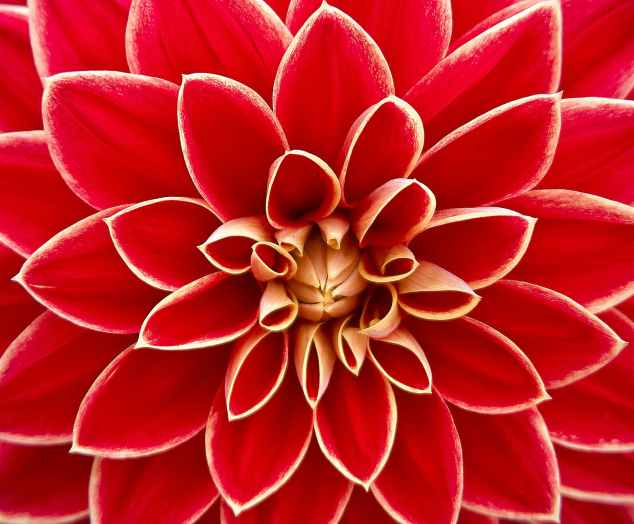close up photography of red petaled flower